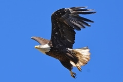 17-Milpitas-Eagles-004