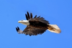 17-Milpitas-Eagles-009