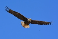 17-Milpitas-Eagles-026