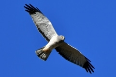 18-Eagles-Nov-021