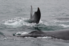 15-Whale-Watching-013