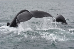15-Whale-Watching-021