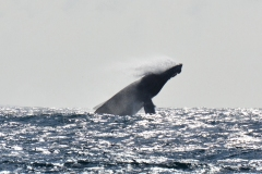 15-Whale-Watching-II-065