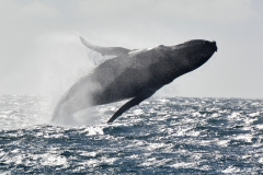 15-Whale-Watching-II-165