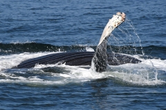 19-Whales-Oct-034