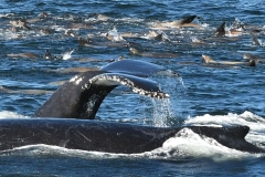 19-Whales-Oct-II-031